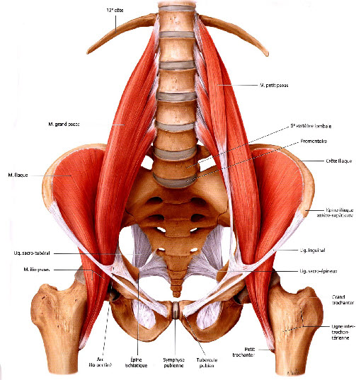 tendinite psoas