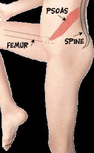 douleur flexion du psoas